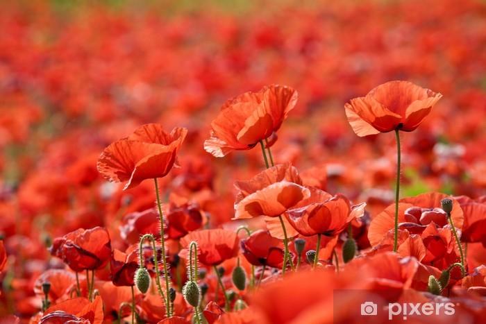 Papier peint vinyle Papaveri rossi in fiore - Fleurs