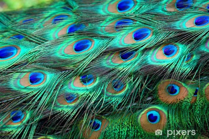 Naklejka Pixerstick Pawie pióra - Zwierzęta