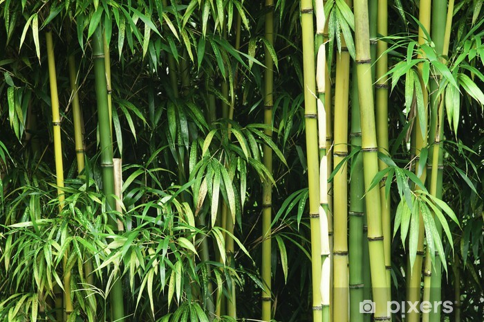 Mural de Parede em Vinil Green bamboo forest - Temas