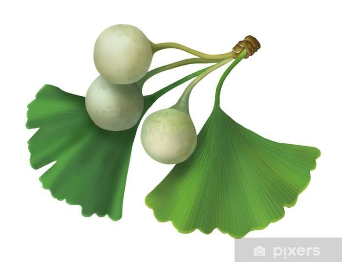 Nálepka Pixerstick Ginkgo biloba (jinan dvoulaločný) rastrového obrázku - Zdraví a medicína
