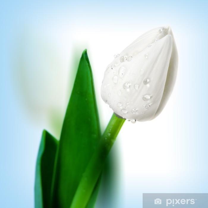 Plakat Piękny tulipan kwiat z kroplami wody - Kwiaty