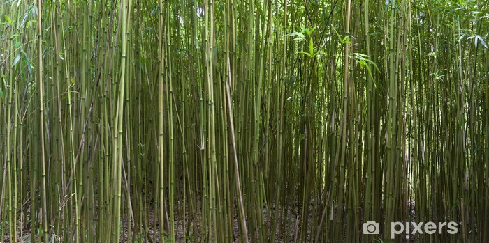 Fototapete Bambus Wald Auf Der Insel Maui Hawaii Pixers Wir