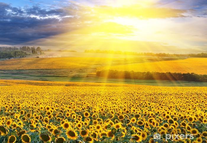 Papier peint vinyle Coucher de soleil sur le champ - Destin