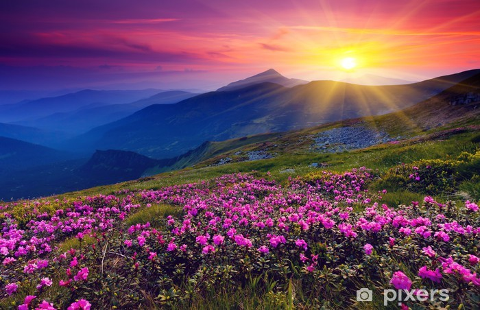 Mountain landscape with purple floweres Pixerstick Sticker - Themes