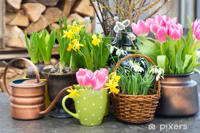 Fototapeta winylowa Tulipany, przebiśniegi i narcyzów kwitnie - Kwiaty