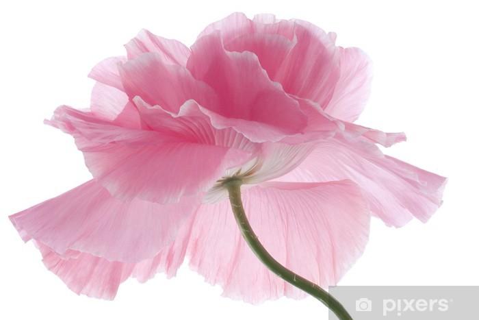 Papier peint vinyle Pavot - Fleurs