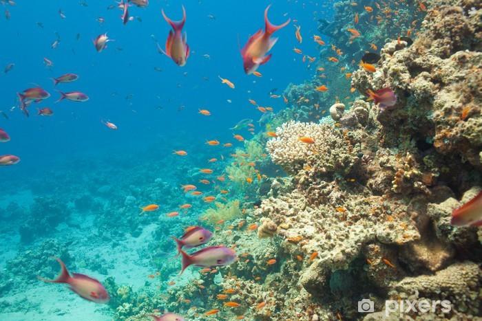 Scalefin anthias fish and corals in the sea Pixerstick Sticker - Aquatic and Marine Life