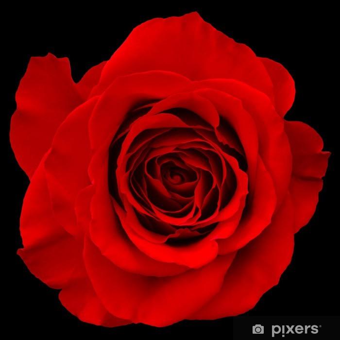 Adesivo Rosa Rossa Isolato Su Sfondo Nero Pixers Viviamo Per Il