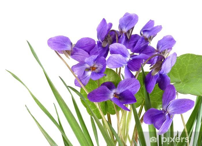 Naklejka Pixerstick Fiołki w trawie - Kwiaty