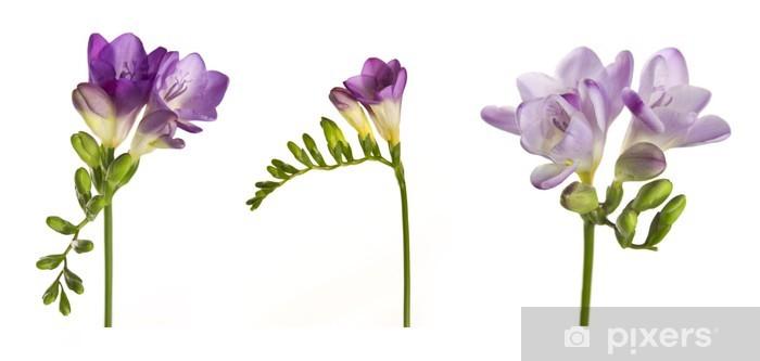 Fototapeta winylowa Frezja - Kwiaty