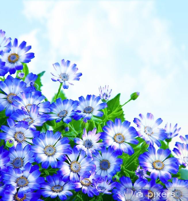 Naklejka Pixerstick Floral granicy stokrotka - Niebo