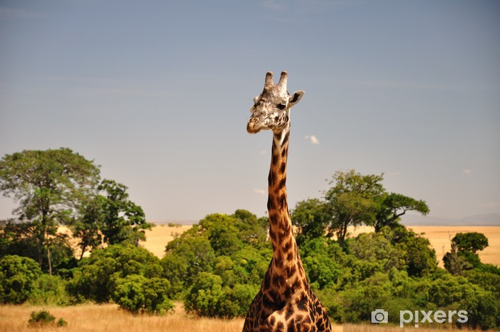 Papier peint vinyle Girafe - Thèmes