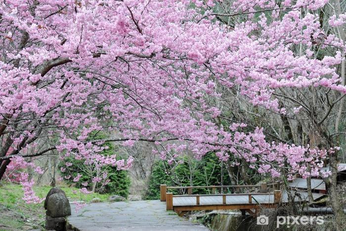 Fotomural Estándar Los cerezos en flor en primavera - Temas