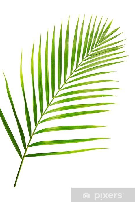 Papier Peint Feuille Verte De Palmier Isole Sur Blanc Pixers