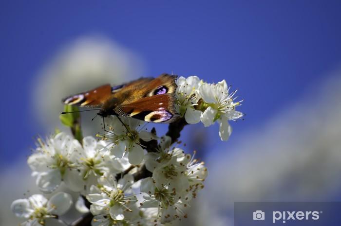Fototapeta winylowa Motyl - Inne Inne