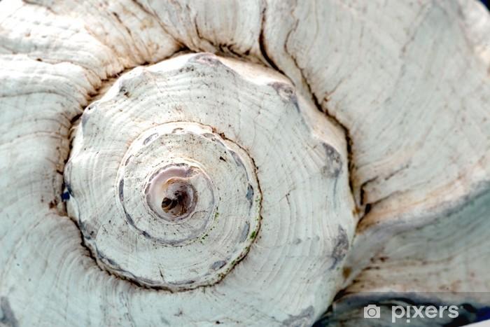 Zelfklevend Fotobehang Puist shell - Het Leven