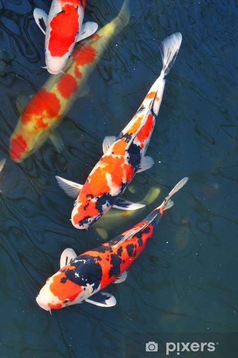 Fototapeta winylowa Koi ryb - Tematy