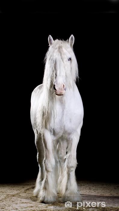 Papier peint vinyle Blanc tourné en studio de cheval - Mammifères