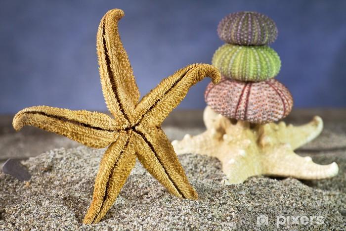 Papier peint Étoiles de mer sur le sable avec des oursins