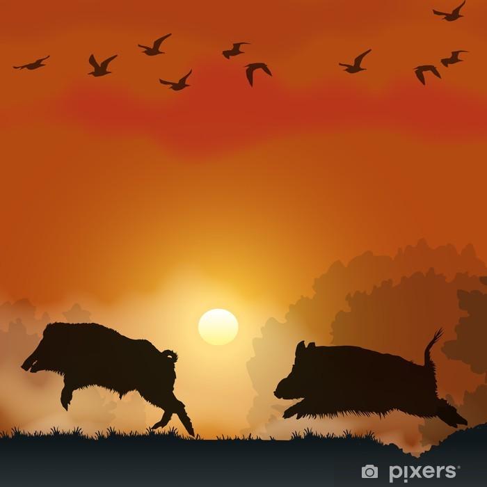 Fototapeta winylowa Wildlife - Dziki na zachodzie słońca - Ssaki