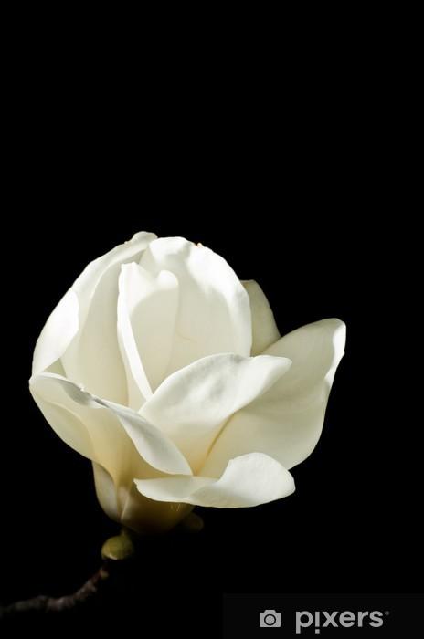 Naklejka Pixerstick Magnolia w nocy - Kwiaty