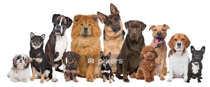 Naklejka na ścianę Grupa dwunastu psów - iStaging