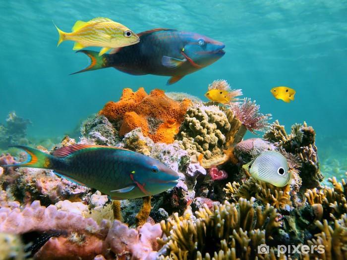Papier peint vinyle Multicolore vie sous-marine - Thèmes