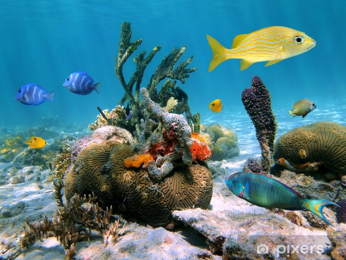 Fotomural Estándar Underwater Sea-Life - Temas