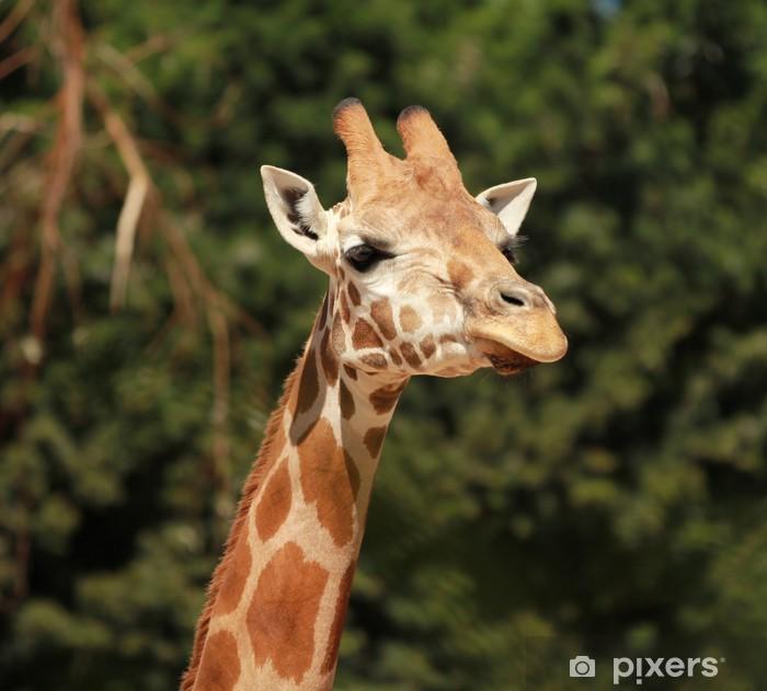 Vinyl-Fototapete Giraffe - Themen