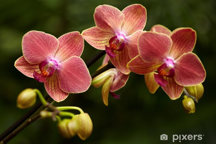 Exotic Orchid Wall Mural Pixers We Live To Change