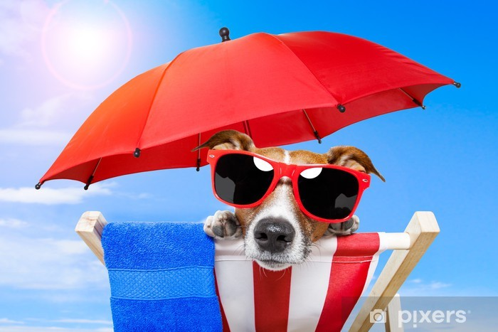 dog sunbathing on a deck chair Vinyl Wall Mural - Holidays
