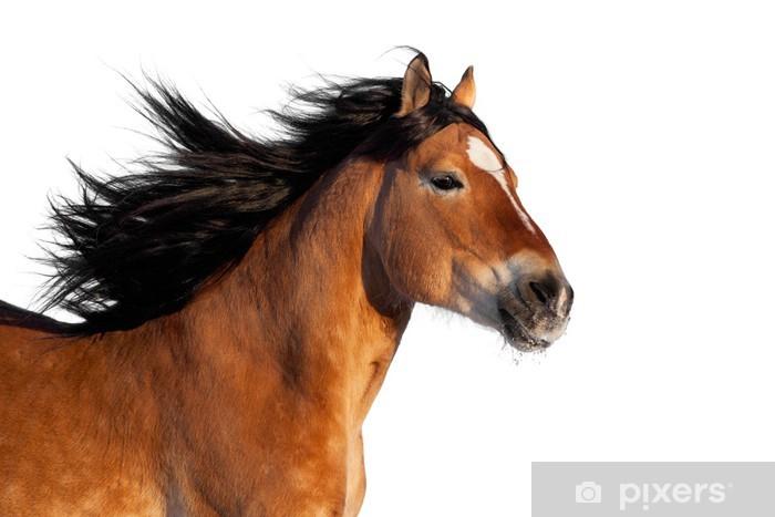 Verrassende Kinderkamer Paarden : Fotobehang baai paard hoofd op een witte achtergrond u2022 pixers® we