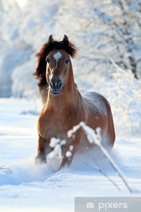 Fototapeta winylowa Koń Bay działa w zimie -