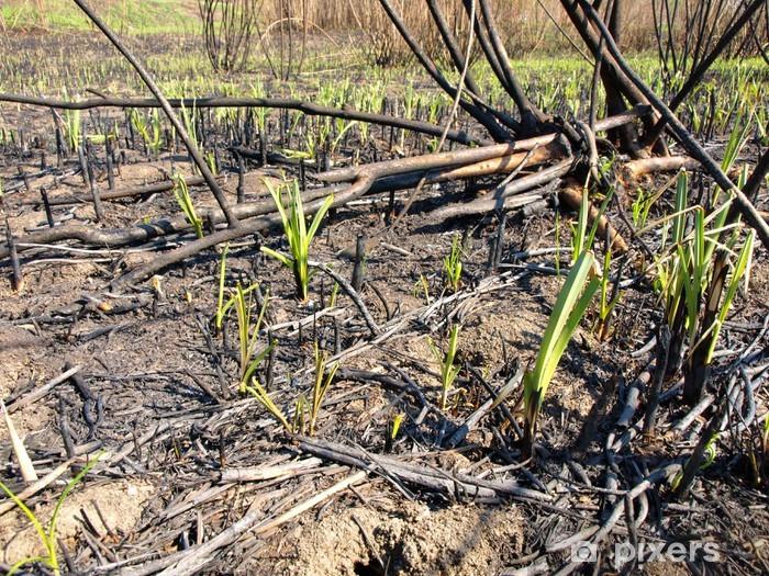 Naklejka Pixerstick Po pożarze lasu - Rośliny