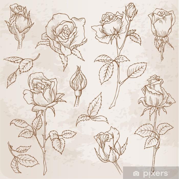 Carta da Parati in Vinile Set Fiore: a mano dettagliate rose disegnate in vettoriale - Celebrazioni