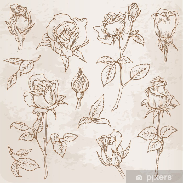 Fotomural Estándar Conjunto de flores: Rosas detalladas dibujadas a mano en vector - Celebraciones