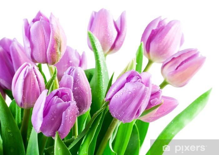 Papier peint vinyle Bouquet de tulipes fraîches sur fond blanc - Fleurs