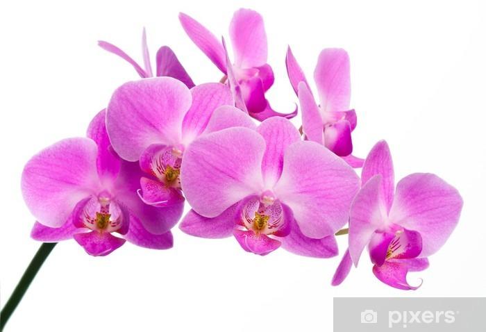 Sticker Pixerstick Belle orchidée rose - Sticker mural