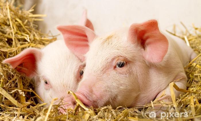 Papier peint vinyle Porcs dans une grange II - Mammifères