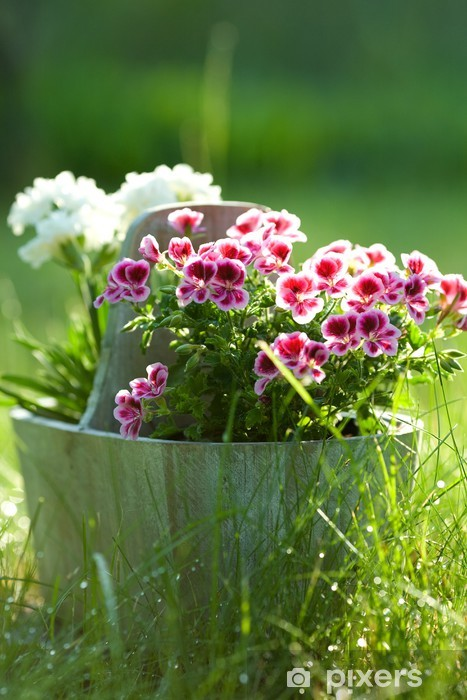 Bloemen In Pot.Fotobehang Vinyl Bloemen In Pot