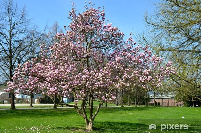 Magnolia Puu