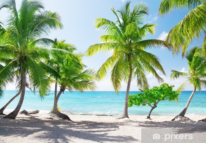 Afwasbaar Fotobehang Paradijselijk eiland in de Dominicaanse Republiek - Thema's
