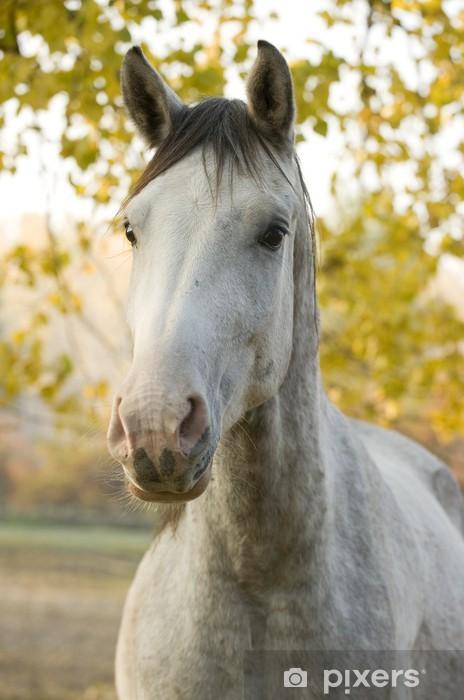 Naklejka Pixerstick Portret konia - Ssaki