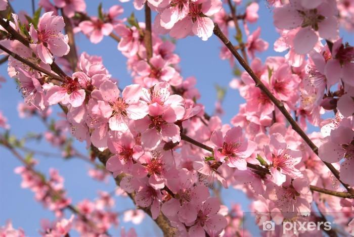 Vinilo Pixerstick Flores De Durazno Pixers Vivimos Para Cambiar