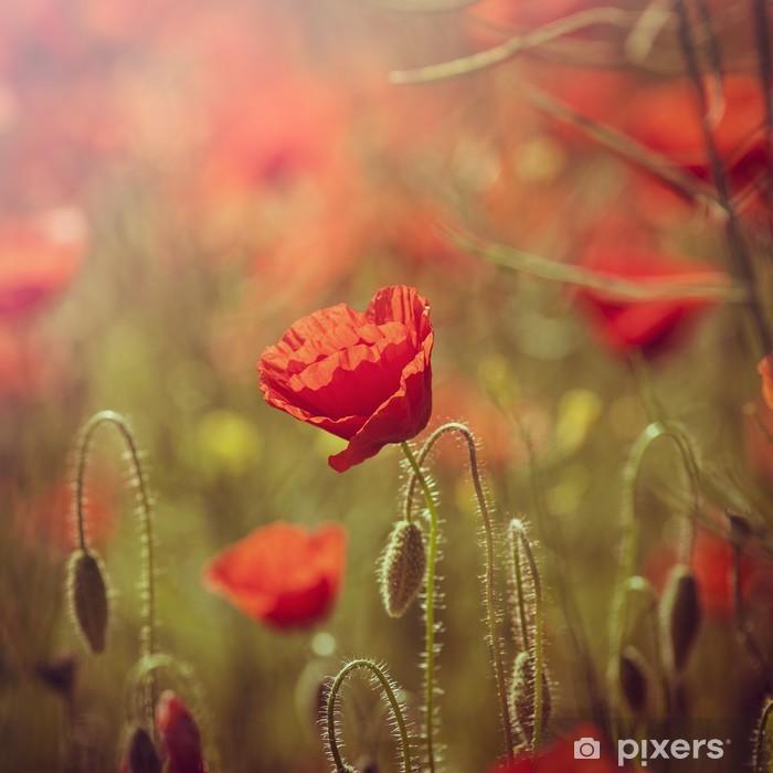 Papier peint vinyle Champ de coquelicots rouges - Saisons