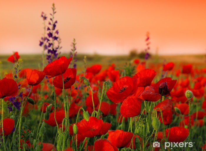 Field of poppies on a sunset Pixerstick Sticker - Themes