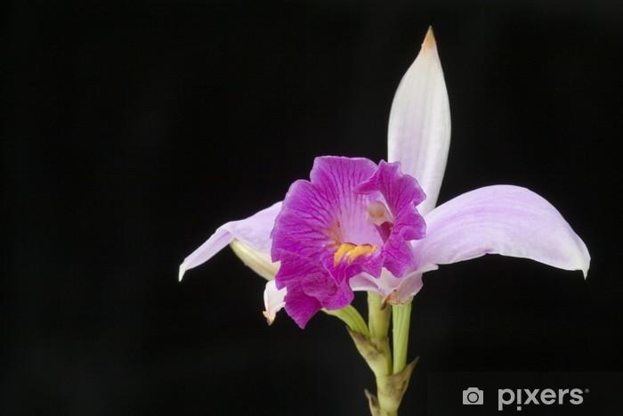 Malaysian Wild Orchid (Arundina graminifolia) Vinyl Wall Mural - Flowers