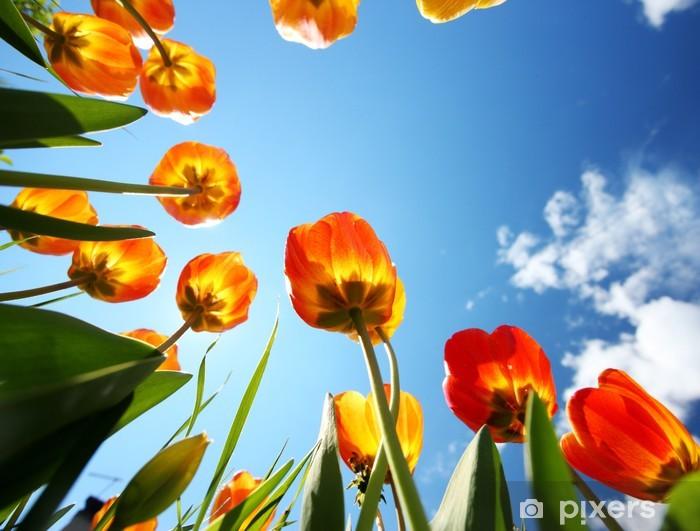 Fototapeta winylowa Kolorowe tulipany w ogrodzie - Kwiaty