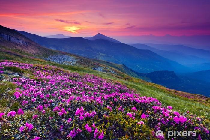 Fototapeta samoprzylepna Górski krajobraz - Łąki, pola i trawy