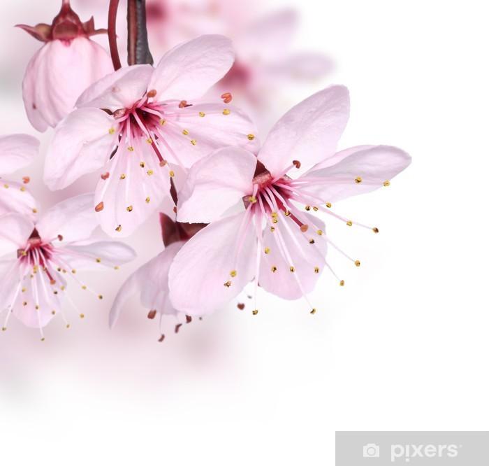 Fototapete Pink Spring Flowers Border Pixers Wir Leben Um Zu